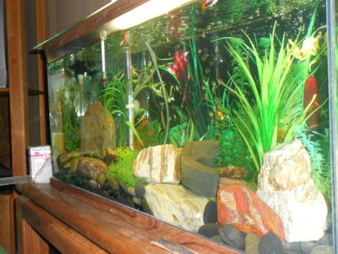 fish tank picture - Another angle.