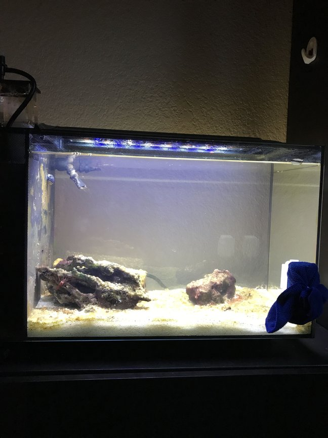 fish tank picture - Please give tips on how the improve