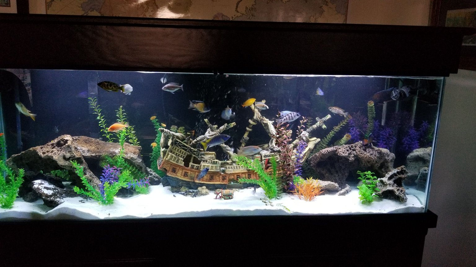 fish tank picture - 150 gallon shipwreck