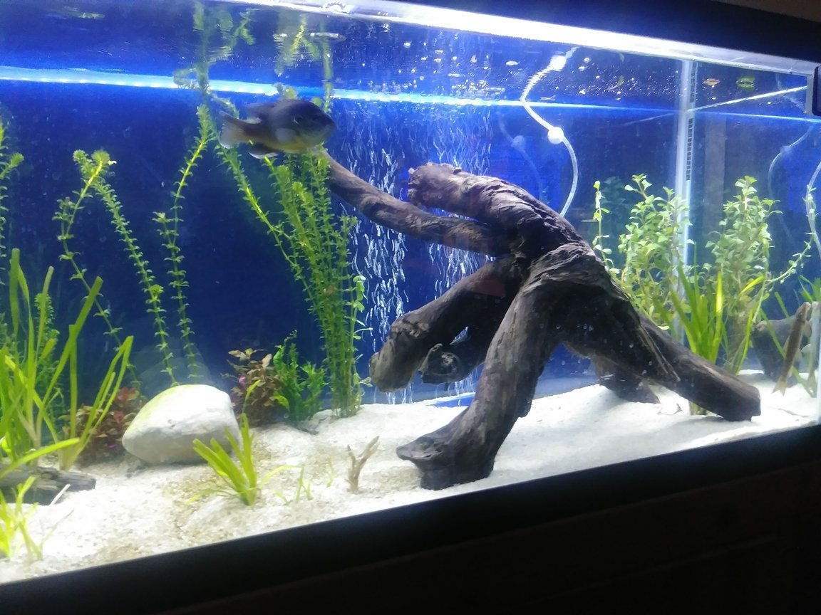 fish tank picture - Right. Nice large piece of driftwood. Still working on this area