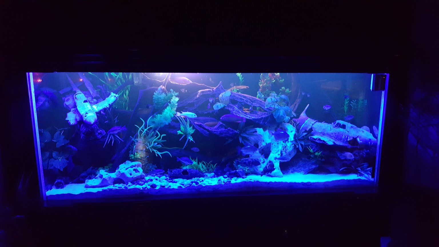 fish tank picture - Tank at night