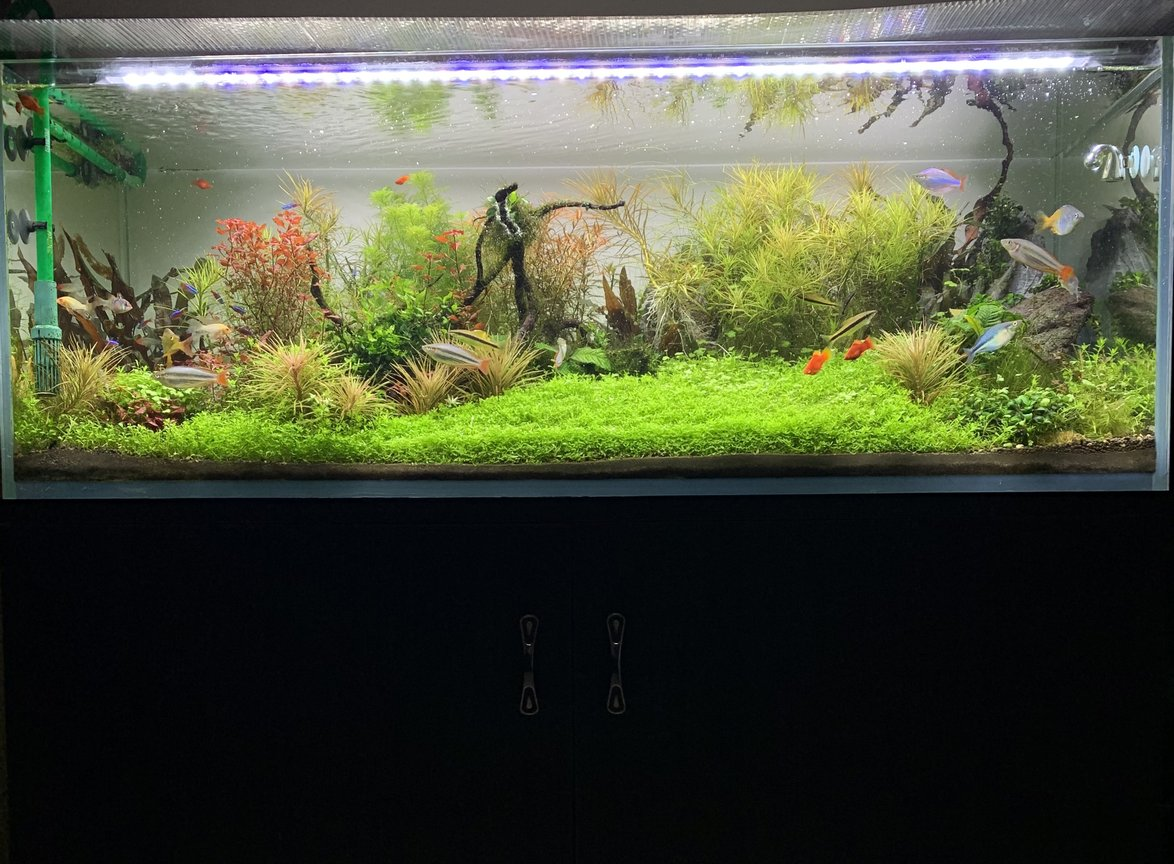 fish tank picture - Thriving stream