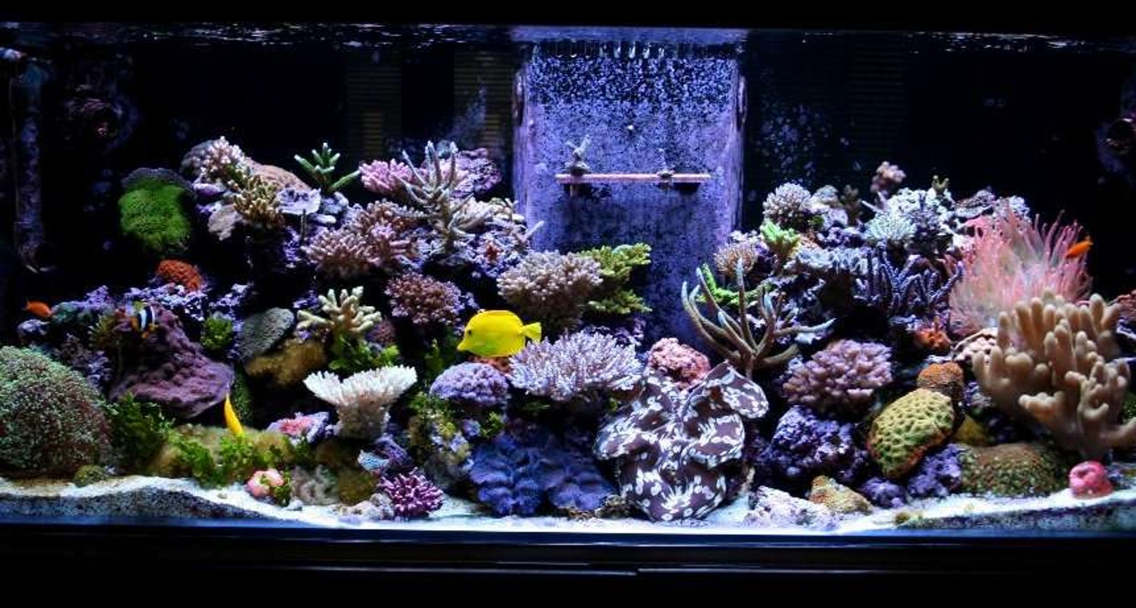 fish tank picture - updated pic of 180