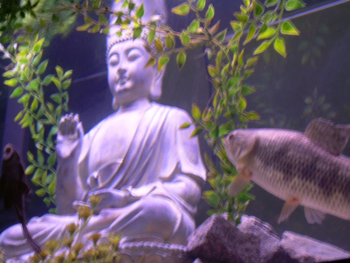 fish tank picture - The Zen Aquarium, Peace and the Beast meet face to face.