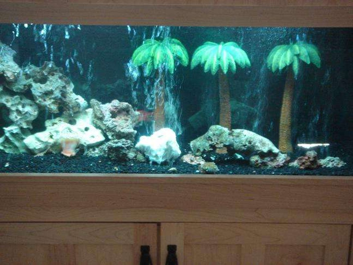 fish tank picture - thw whole tank