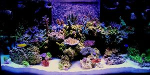 120g tech tank spsand rare green Nepthea ans some Sinularia 400w Reeflux 10k 2 250w Radium 20k on the sides 3 Uri vho super actnics1 actinic white vho Uri2 fiji purple t5 Octo Extreme 250 skimmerGeo 618  calreactormag 18 2 Ecotech Vortecs  2 Hydor Koraliaand a 3 and a 4150lbs Marco rock 170lbs approx live sand Seachem reef salt the only salt I will ever use 1 in my bookI dose MagIodineStrontiumPotassiumonly when needed which is very rare with this salt mixZeovite Amino acids and Zooplankton and lots of fish food I over feed my fish to keep my coral color where I like it Some gfo in a reactor