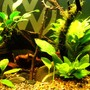 fish tank picture - Central Cave, Anubis Garden on Drift, Moss Stick + River Stones