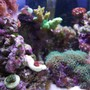 fish tank picture - zoomed in view