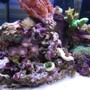 fish tank picture - left hand side view