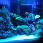 fish tank picture - Actinics