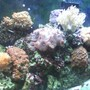 fish tank picture - 55gal. reef