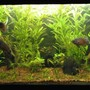 fish tank picture - Low Tech Aquarium