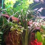 fish tank picture - 55