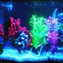 fish tank picture - Tank with marine glo lighting.