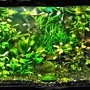 fish tank picture - Just re-planted 600 lire planted tank, beats my plasma screen ever time.