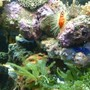 fish tank picture - a small section of the tank...home to the scallop.