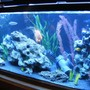 fish tank picture - Happy Cichlid Community :P