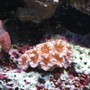 fish tank picture - acan