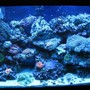 fish tank picture - actinic