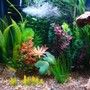fish tank picture - View of left side with cardinals