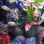 fish tank picture - My Tank 2