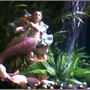 fish tank picture - every tank needs a mermaid to watch over her fish