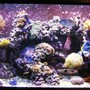 fish tank picture - 120g Reef, 1 year old, still growing...