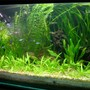 fish tank picture - I keep fresh water fish long time ago but when i saw sum planted tank photos on net when I surfing sum information that time I decide to kept the planted tank. I am a 3D graphic Artist