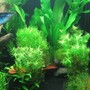 fish tank picture - Right close-up