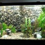 fish tank picture - 90 gallon NW cichlid tank with diy 3d background