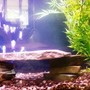 fish tank picture - My 29 Gallon Tank New photo coming soon!!