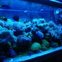 fish tank picture - Actinic View