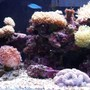 fish tank picture - Coral and Six Line