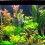 fish tank picture - full view