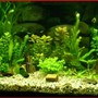 fish tank picture - my 50 gallon at 5 weeks