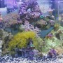 fish tank picture - middle of tank