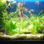 fish tank picture - Photo 2