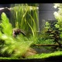 fish tank picture - front of the tank with open bottom column