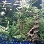 fish tank picture - another shot of my tank i love fishing