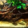 fish tank picture - Amazon Biotope