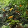 fish tank picture - Another photo. it is hard to choose which one is best