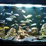 fish tank picture - front