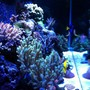 fish tank picture - 75 gallon mixed reef tank