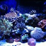fish tank picture - 75 gallon mixed reef