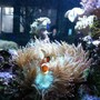 fish tank picture - Clown hosting in elegance