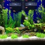 fish tank picture - Seachem purigen cleans very well