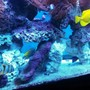 fish tank picture - Group photo
