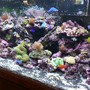 fish tank picture - FISH!