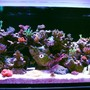fish tank picture - 3 of 4