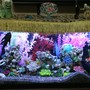 fish tank picture - Tank pic 3